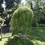 9- Na zahradě je to opravdová oáza